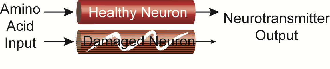 How to Improve Neurotransmitter Function   Amino Acid Therapy